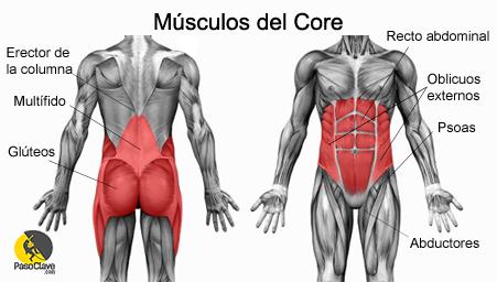 musculos-del-core-1